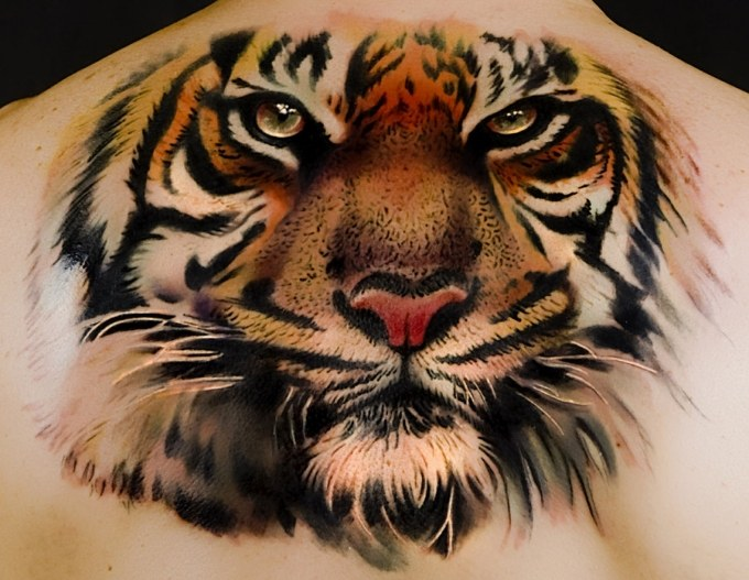 The Tiger is one of the most revered cat species on the planet. According to a recent poll by the Animal Planet, the Tiger is also one of the world's most ...