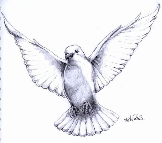 A Funny Dove Tattoo Design photo - 1