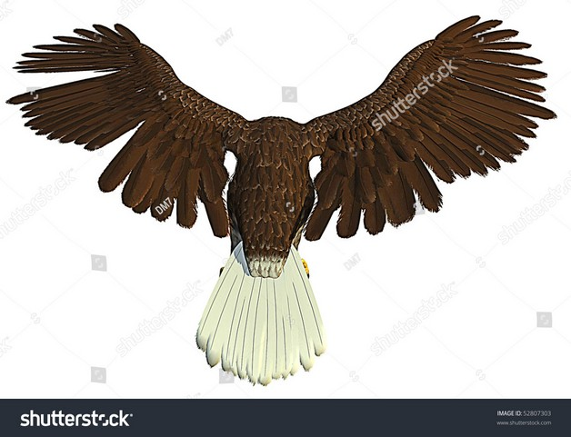 American Eagle Tattoo On Back photo - 1