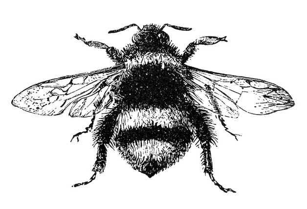 Cute Bumblebee Fairy Tattoo Design photo - 1