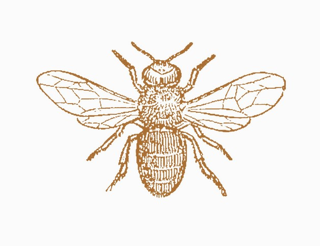 Elegant Bee Tattoo photo - 1