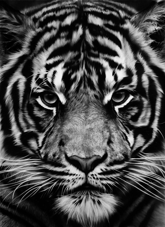 Tiger Blak And Gray Tattoo photo - 1