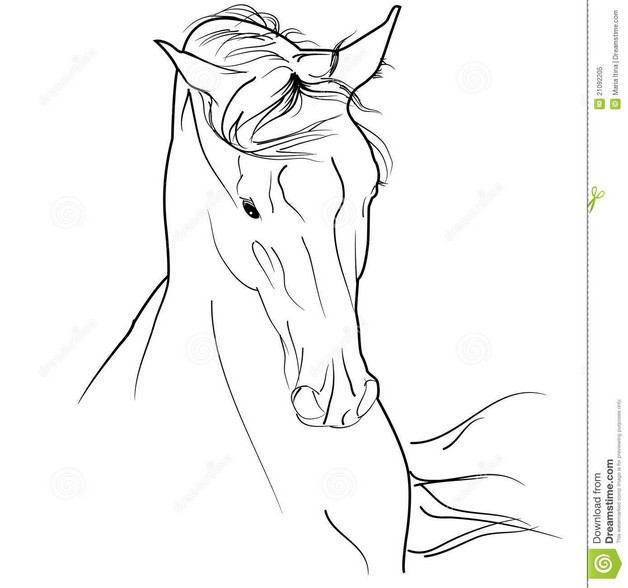 arab horse head tattoo design photo - 1