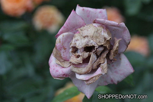 beautiful pink flowers animal head tattoo photo - 2