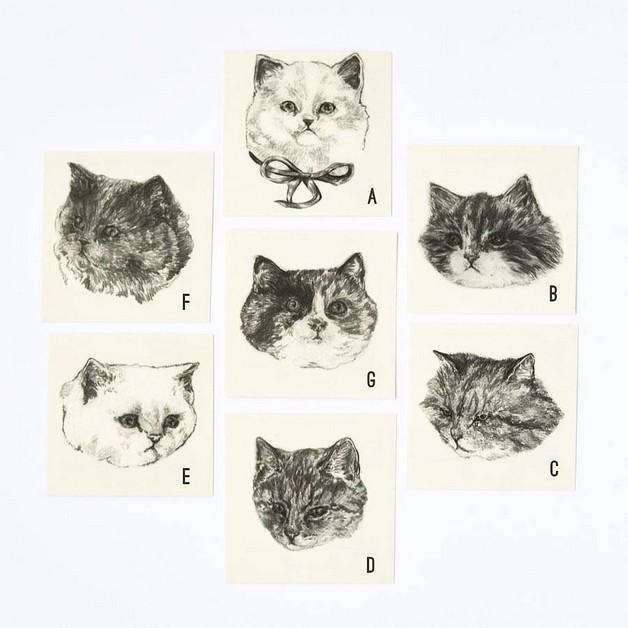 cat portrait in frame tattoos photo - 1