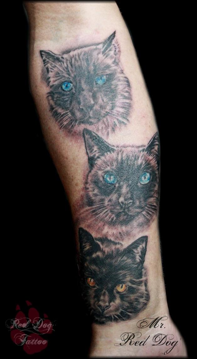 cat tattoo photo - 2