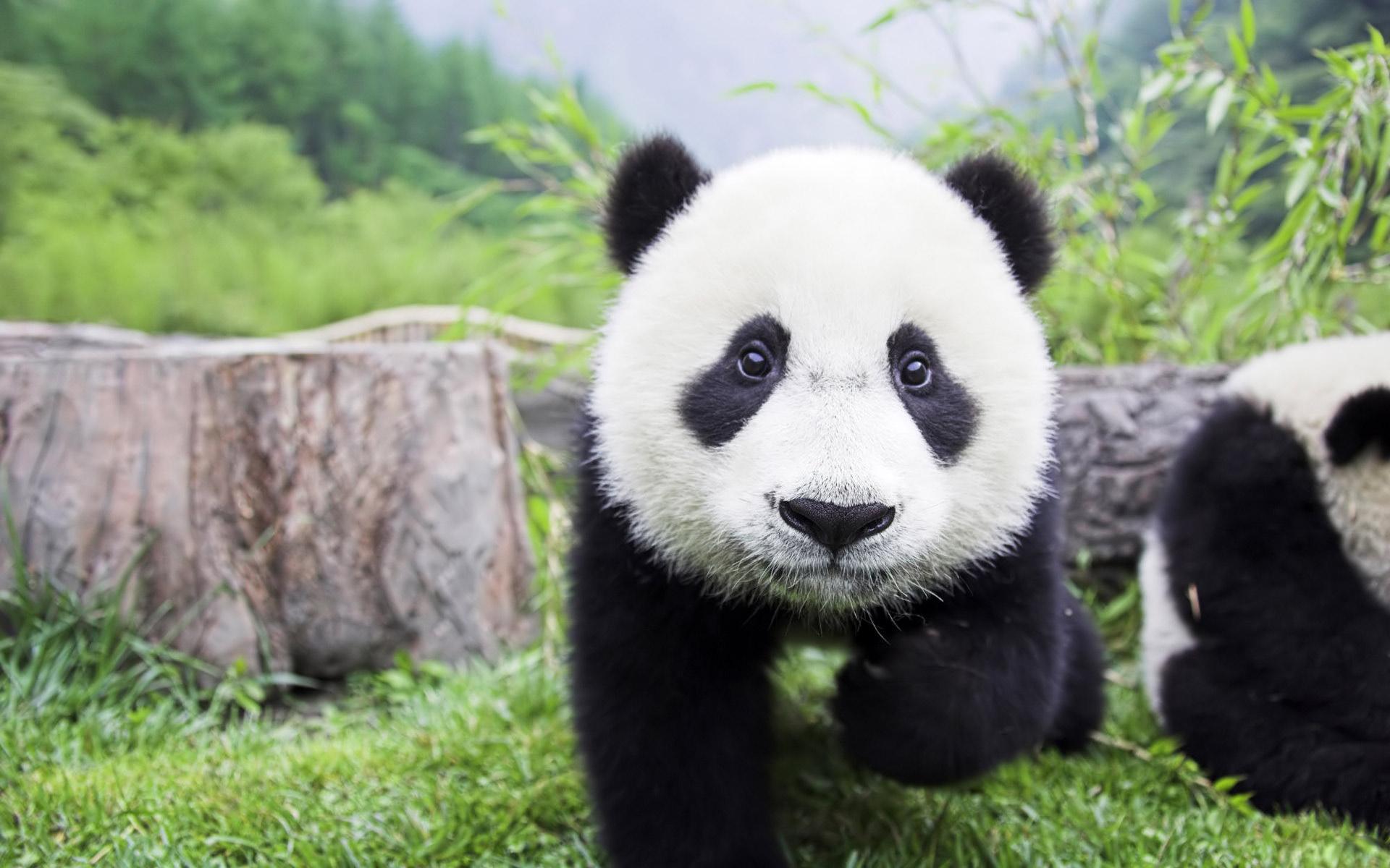 flowers panda and bamboo tattoos photo - 2