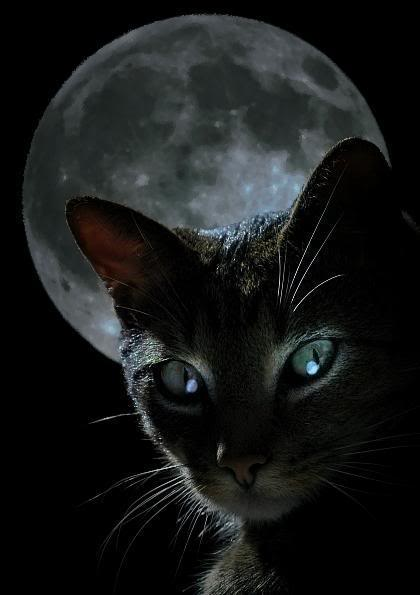 green eyed cat face tattoo design photo - 2
