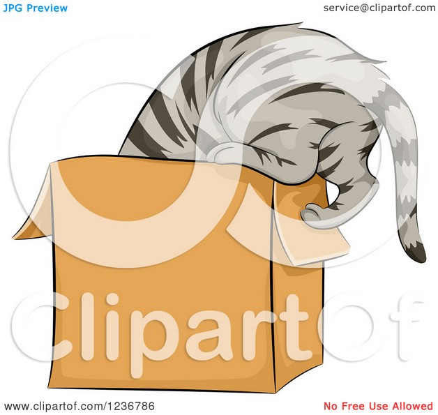 tabby cat tattoo design photo - 1
